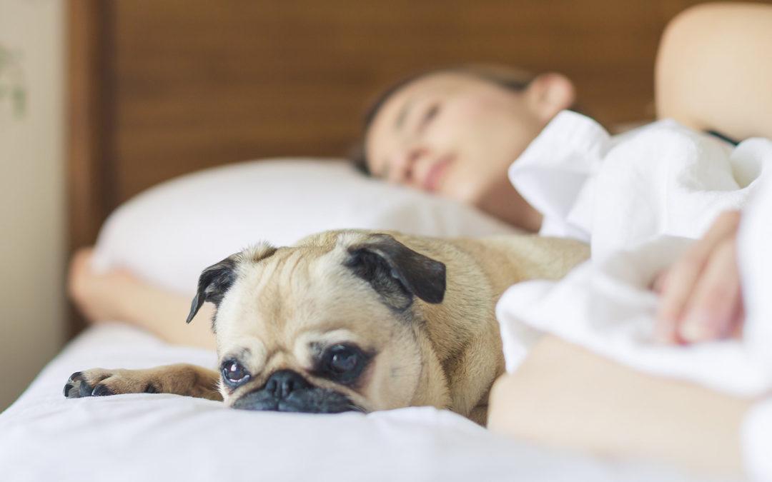 Az alvás – van, akinek megy, van akinek nem